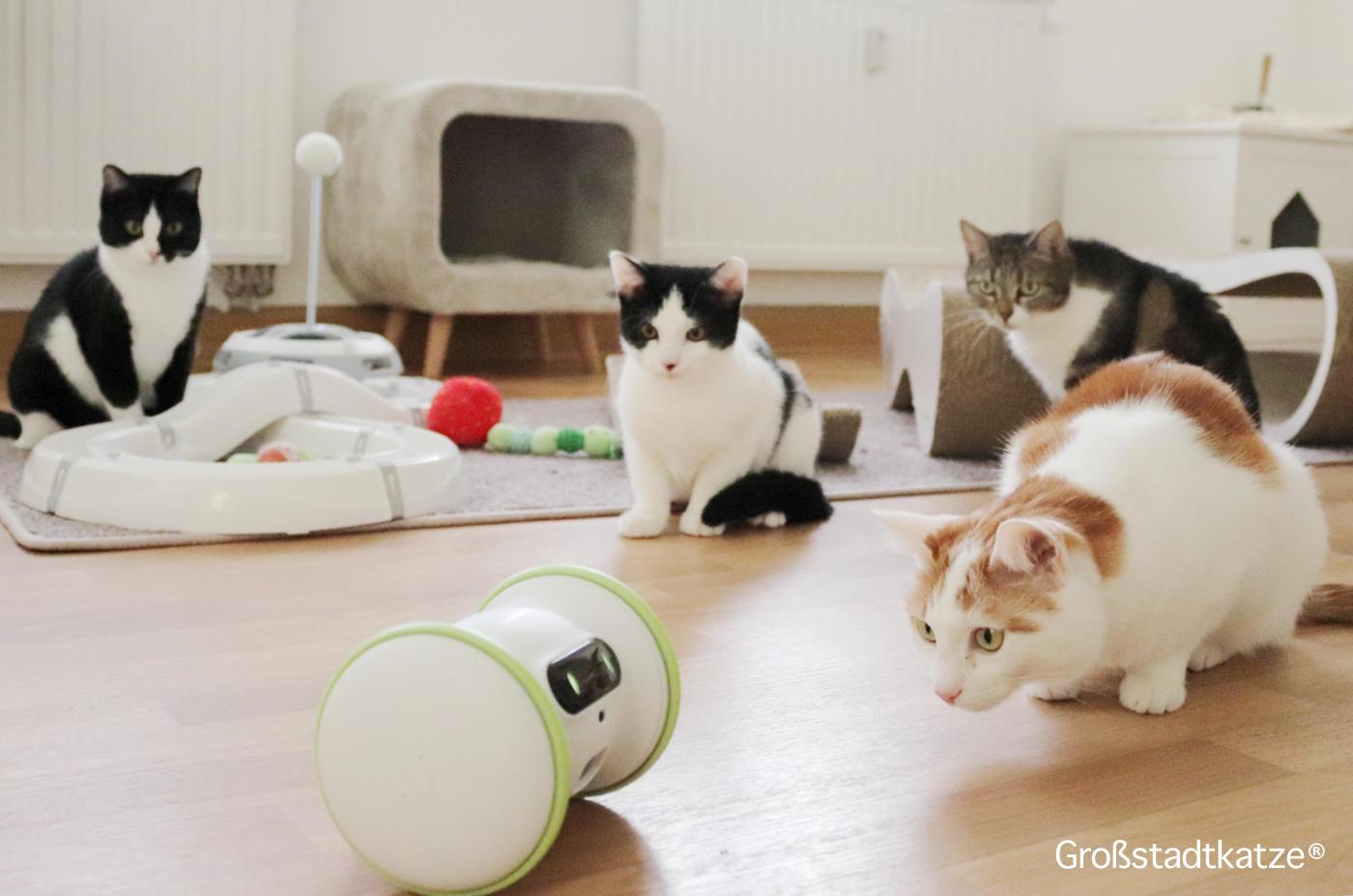 Von Kindern, Katzen, Krümeln und einem Roboter